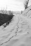 Footprints on snow Stock Image