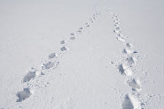 Footprints on snow Royalty Free Stock Image
