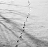 Footprints in the snow. With shadows from the tree Stock Photography