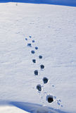 Footprints in the snow Royalty Free Stock Photos