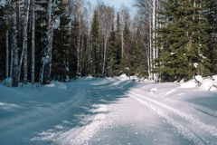 Footprints in the snow from the car. The road to the forest. Winter landscape. Winter in Siberia. Winter road. Trees in the snow royalty free stock images
