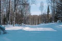Footprints in the snow from the car. The road to the forest. Winter landscape. Winter in Siberia. Winter road. Trees in the snow stock image