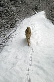 Footprints in the snow upon dog ice Stock Photo