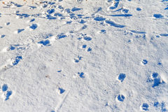 Footprints in the snow Royalty Free Stock Photography
