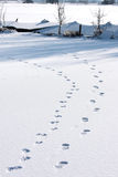 Footprints in the snow upon dutch ice. A man with his dog has walked through a fresh layer of snow and left his footprints in the forelands of the river of Royalty Free Stock Images