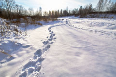 The footprints in the snow field Royalty Free Stock Image