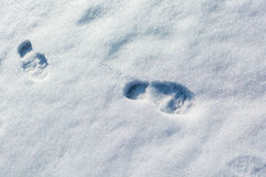 The footprints in the snow Stock Photo
