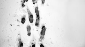 Footprints in the snow. Footprints on the first snow. Imprint an stock photography