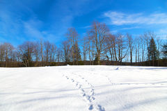Footprints on the snow and a forest on background. Stock Image