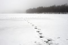 Footprints on snow lake. Chain of footprints on iced lake Stock Images