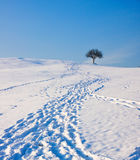 Footprints in Snow Leading to Tree Stock Photography