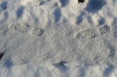 Footprints in the snow Stock Image
