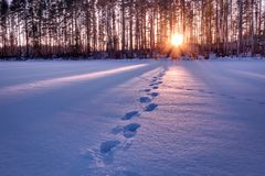 Footprints in snow leading towards sunset HDR shot Stock Photography