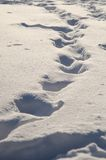 FOOTPRINTS IN THE SNOW. A LONG WALK ON THE SNOW JUST FALL royalty free stock photo