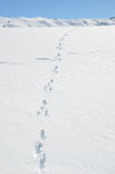 Footprints on the snow. Royalty Free Stock Photos