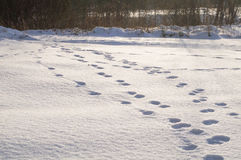Footprints in the snow Stock Images