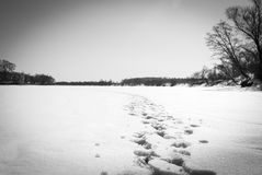 Footprints in the snow. River in winter. Footprints in the snow Royalty Free Stock Photography