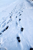 Footprints in the snow Royalty Free Stock Images