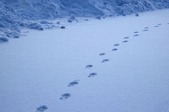 Footprints in the Snow Show a Path for Progress Royalty Free Stock Photos