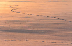 Footprints on the snow. Snow and winter landscape Stock Image