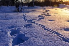 Footprints in the snow at sunrise. Winter landscape royalty free stock photography