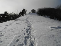 Footprints in the snow. Tracks in the snow into the distance Royalty Free Stock Image
