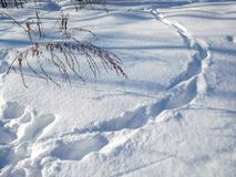 Footprints in snow. Tracks in the snow in the forest texture Stock Photo