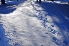 Footprints in the Snow with Trees and park Stock Photo