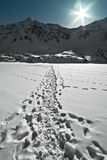 Footprints in the Snow. In winter royalty free stock photos
