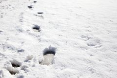 Footprints in the snow. Winter blanket of snow with boot or foot prints walked in Royalty Free Stock Photo