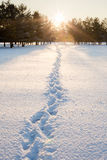 Footprints in the snow in the winter forest Royalty Free Stock Images