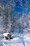 Footprints in the snow of a winter forest Stock Image