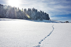 Footprints on snowy hill Royalty Free Stock Photo
