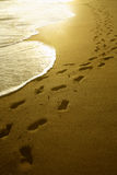 Footprints at sunrise. Footprints going over a sand beach Stock Images