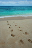 Footprints on a tropical beach. Footprints in the sand Stock Photo