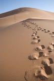 Footprints up a dune Stock Image