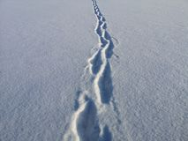 Footprints on velvet snow on a sunny, frosty January day. Cold, crisp white snow royalty free stock photo