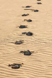 Footprints visible in sand on desert. Stock Photo