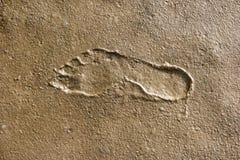 Footprints in the Wadden Sea Stock Photos