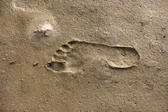 Footprints in the Wadden Sea Royalty Free Stock Image