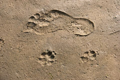 Footprints in the Wadden Sea Royalty Free Stock Photo