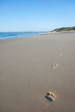 Footprints walking alone on secluded scenic beach Royalty Free Stock Images