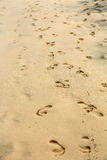 Footprints on wet sand of the beach Royalty Free Stock Photography