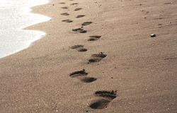 Footprints in wet sand of beach Royalty Free Stock Photo