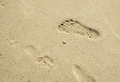 Footprints in wet sand close to sea Royalty Free Stock Image