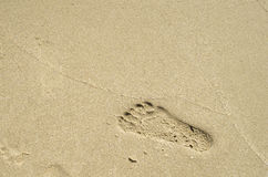 Footprints in wet sand close to sea Stock Image