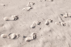 Footprints in white coastal sand on ocean beach Stock Photography
