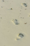 The footprints in the white sand Royalty Free Stock Photo