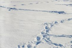 Footprints on white snow royalty free stock photo