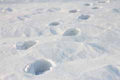 Footprints on white snow at sunset Royalty Free Stock Image